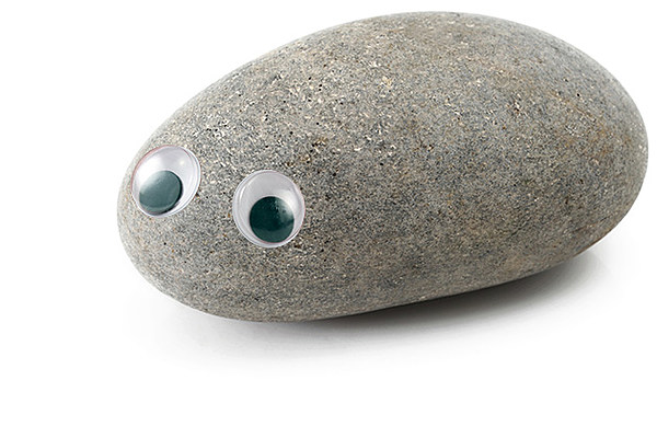 pet rock A pet rock can be obtained from askeladden during and after the fremennik trials quest after the quest multiple pet rocks can be obtained by talking to him again in.
