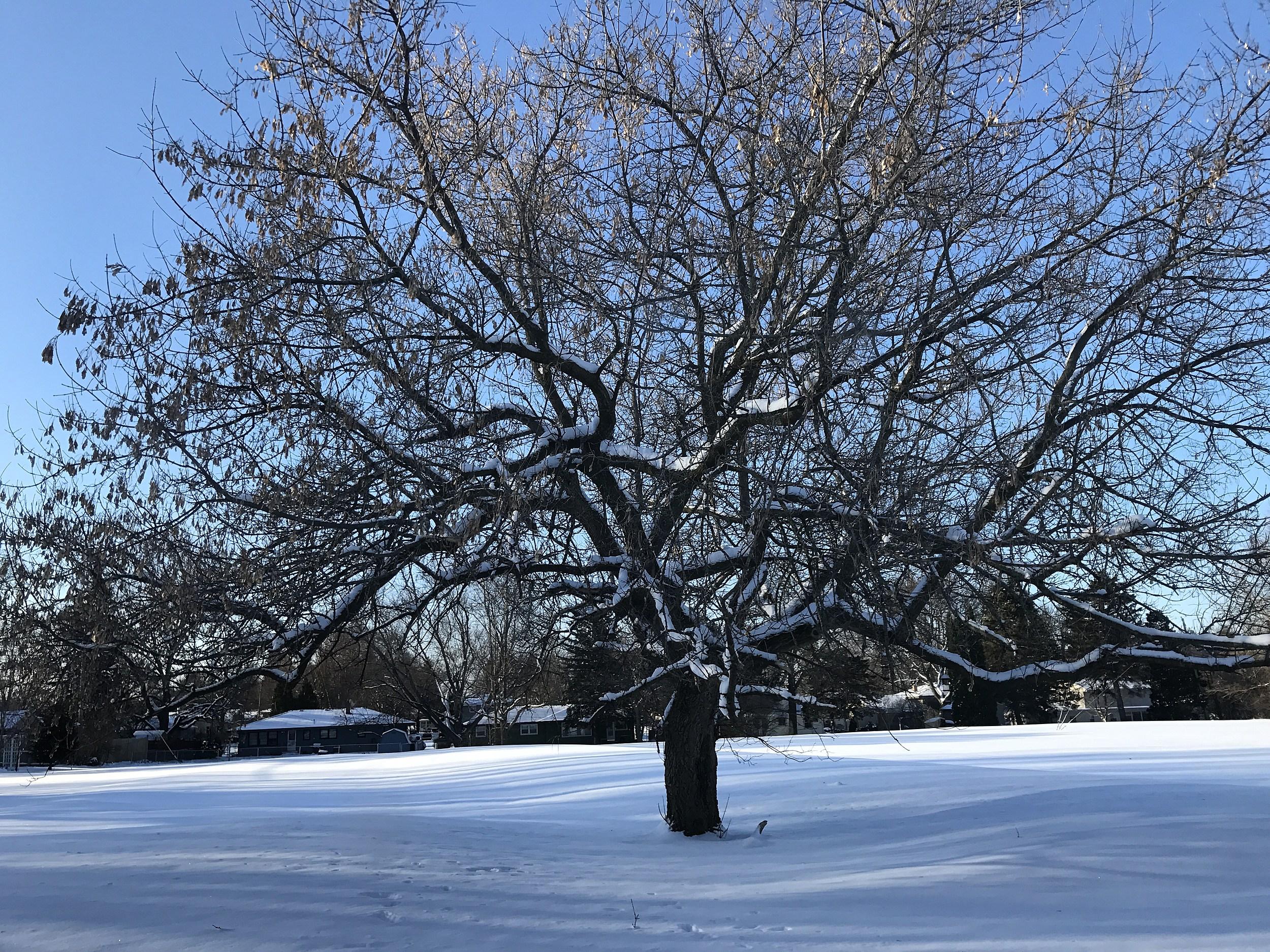 Snow In Rockford