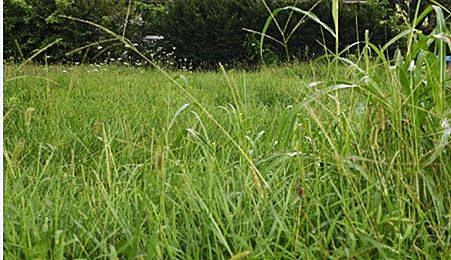 How Tall Can Your Grass Be in Rockford?