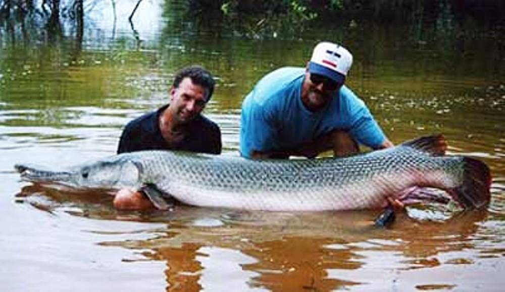 Picture Of A Gar Fish | Idnr To Reintroduce Alligator Gar Fish In Illinois Waters