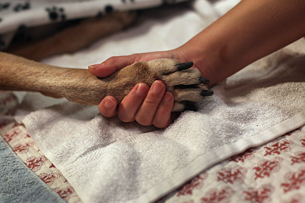Heat Dangerous For Dog Paw Pads