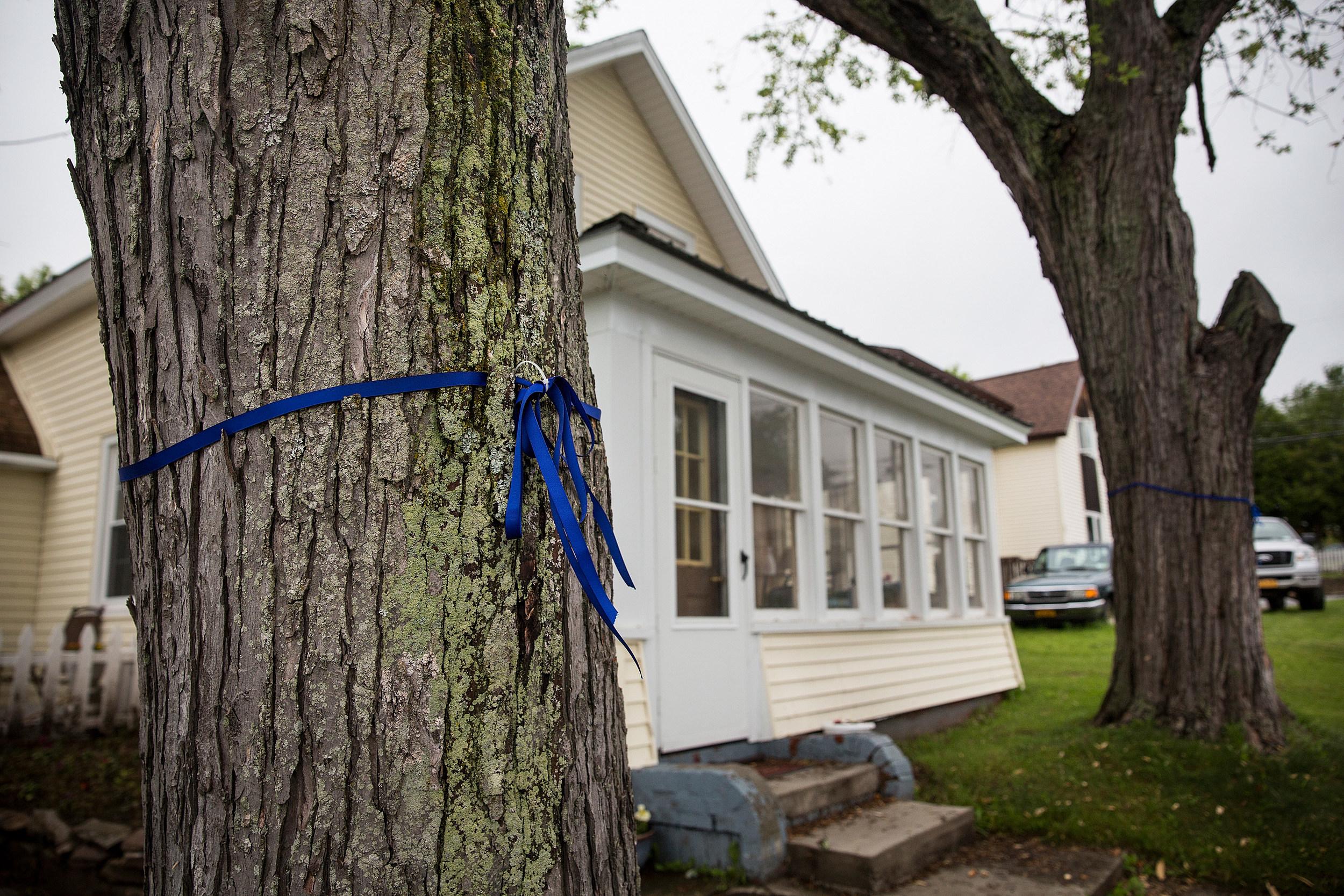 Blue Ribbon on Tree